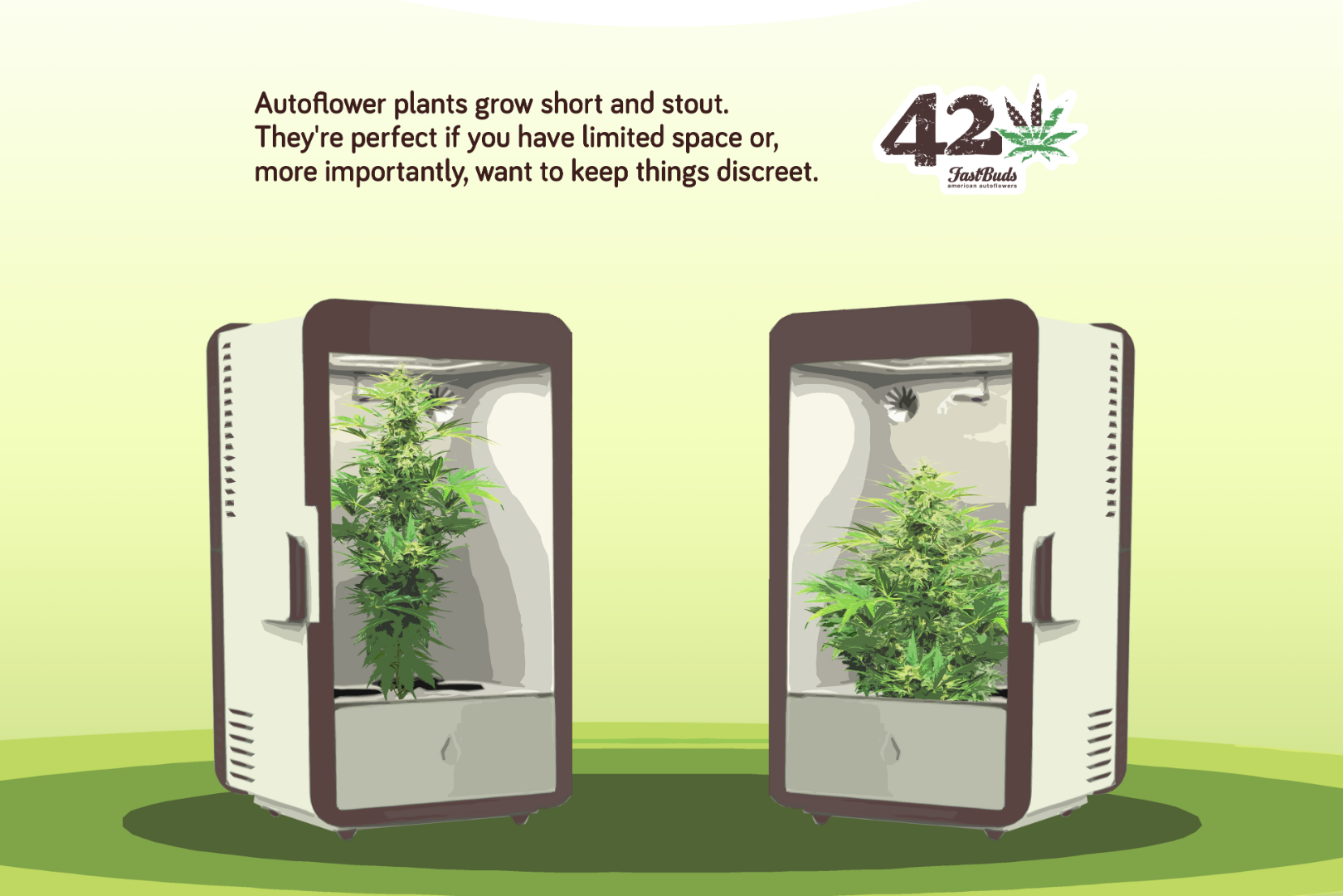 Autoflowering Cannabis is perfect for privately minded growers