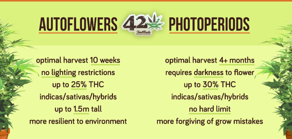 A table listing the pros and cons of autoflowering cannabis