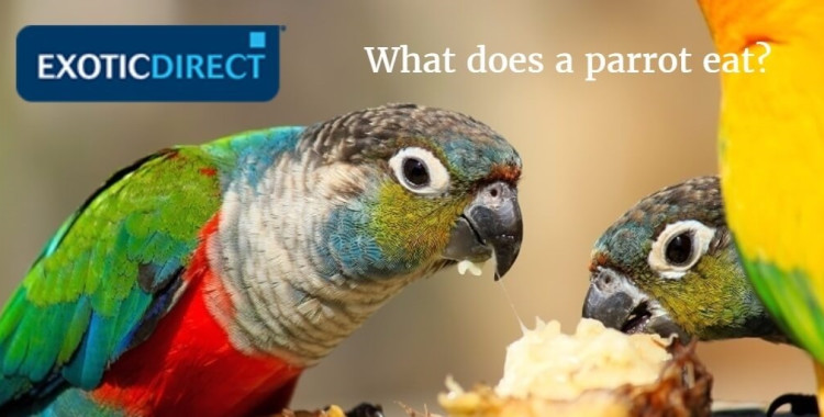 parrots_eating