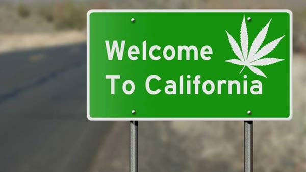 California Cannabis Seed Banks