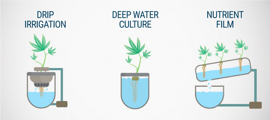 Drip Irrigation System and Deep Water Culture Hydrocultivation