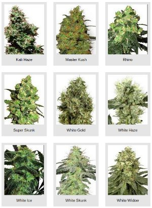 white label cannabis seeds