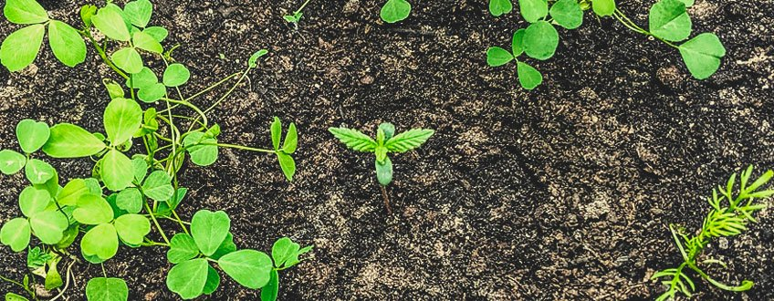 THE SOIL FOOD WEB AND PLANT INTELLIGENCE