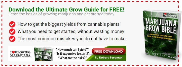 The Ultimate Grow Guide For Autoflowering Seeds
