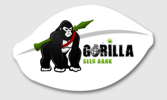 Gorilla Seed Bank Review About