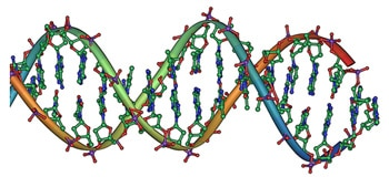 Cannabis DNA double helix