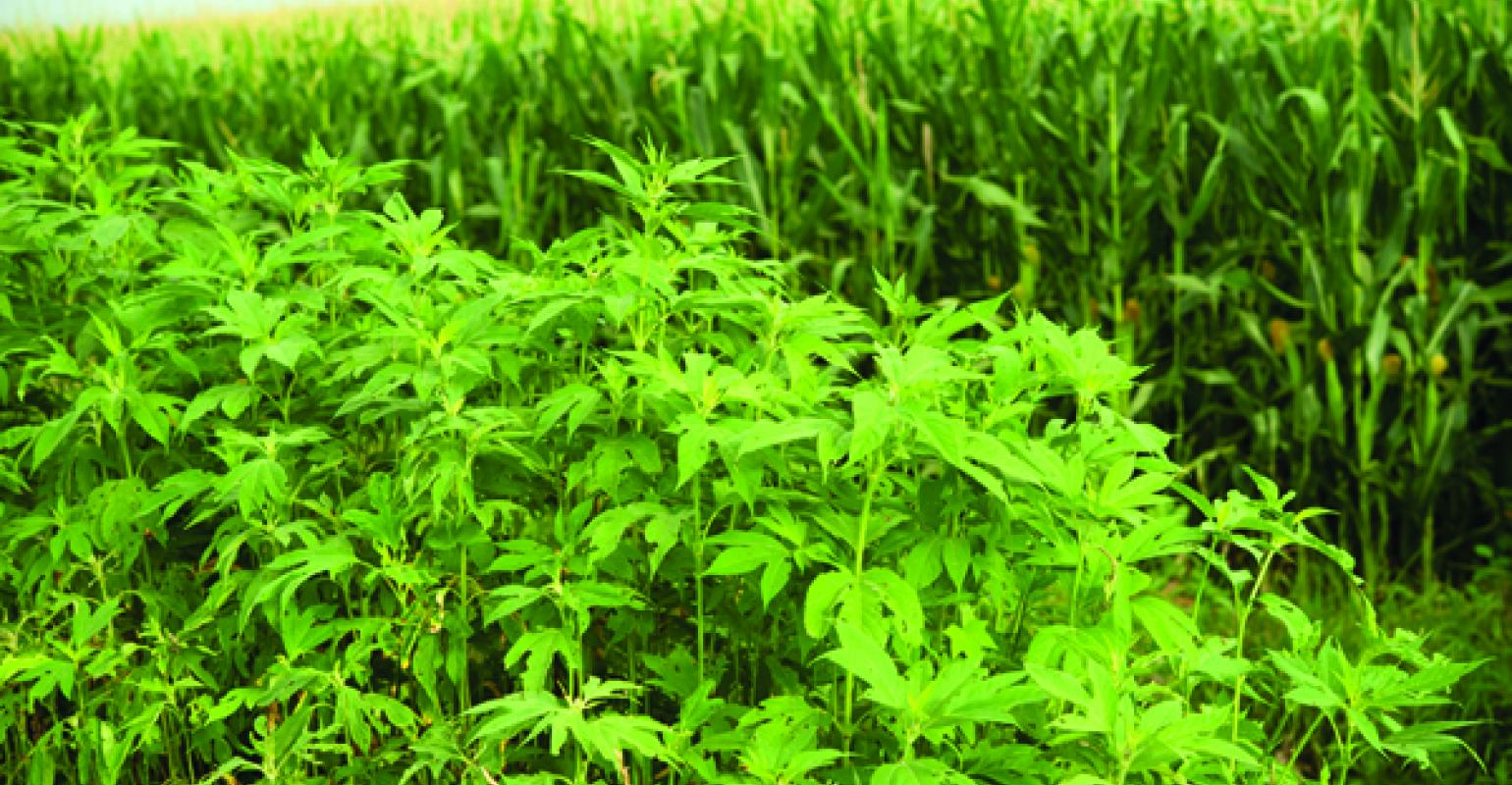 How to kill weed seeds before they get started in your fields