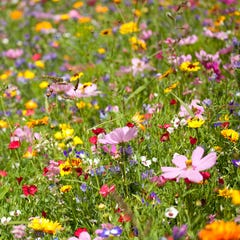 spring into summer wildflower mix