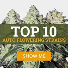 Top 10 Auto Flowering Strains