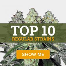 Top 10 Regular Strains