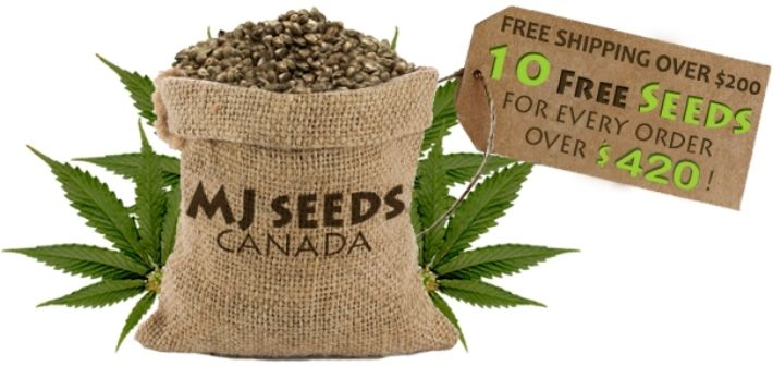 about mj seeds canada