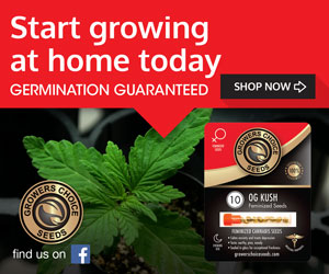 Where to buy pot seeds in colorado