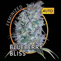 Blueberry Bliss Auto (Vision Seeds) Cannabis Seeds