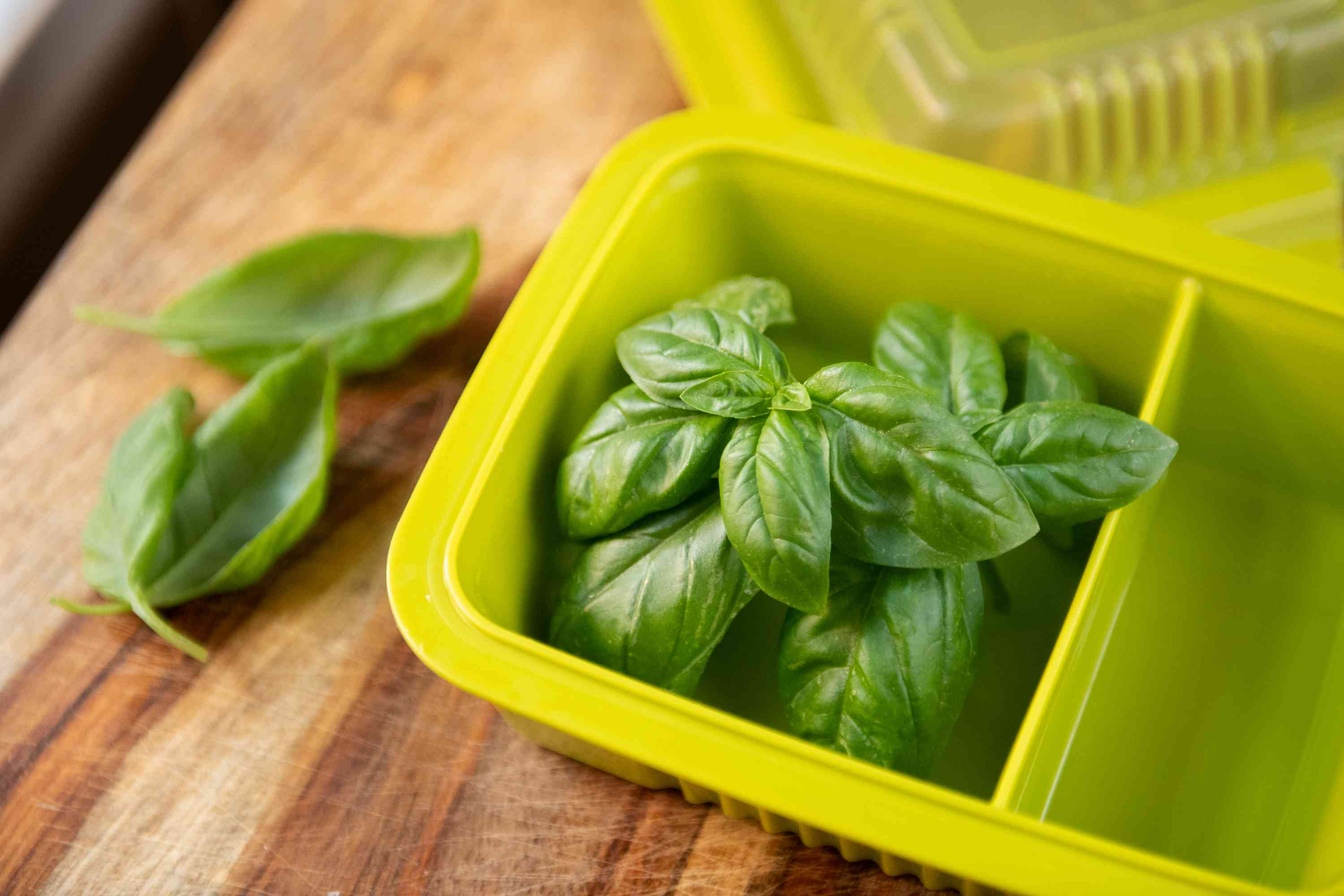 harvesting and freezing basil in ice cube trays