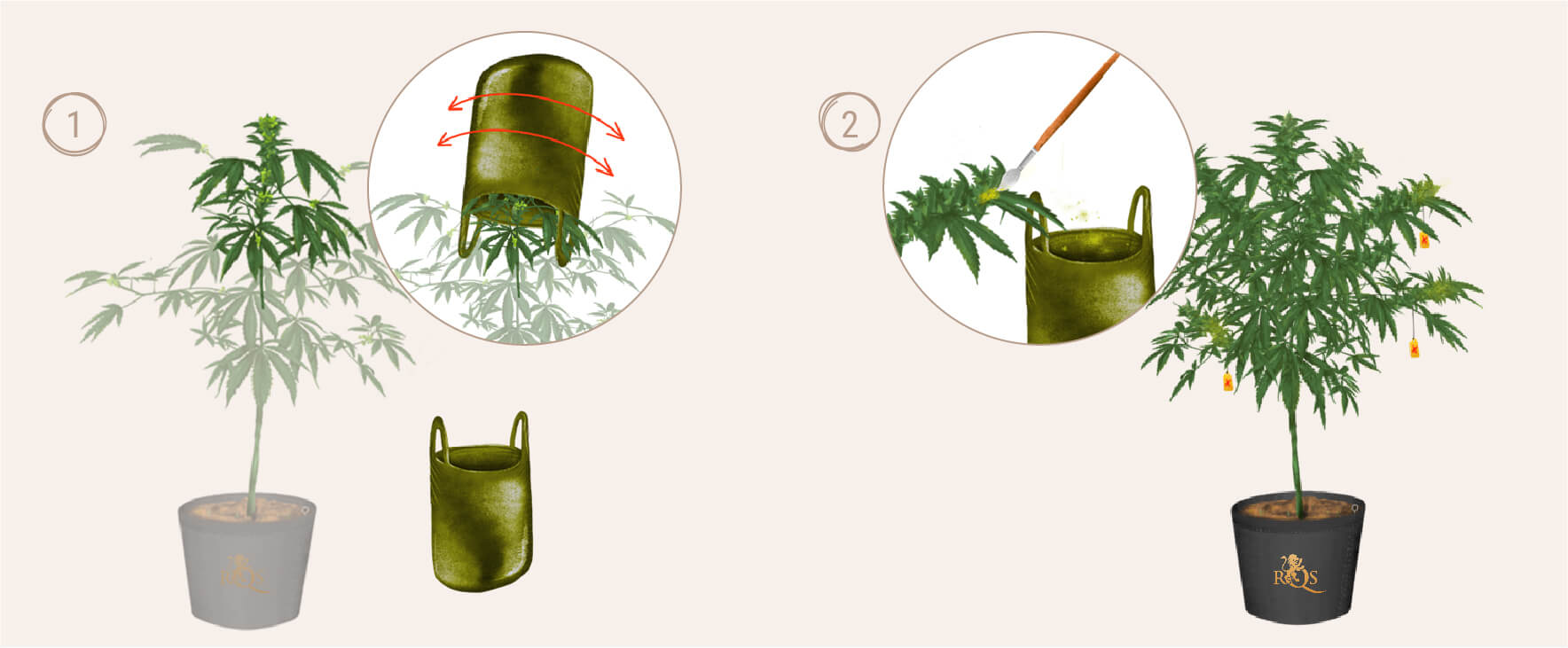 BREEDING: CREATE YOUR OWN STRAINS