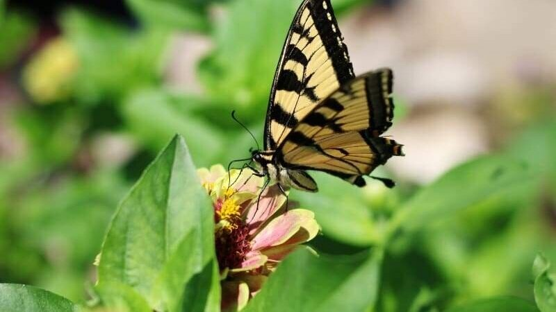 bring-in-the-butterflies-collection-seed-collections-pinetree-garden-seeds_264_800x.jpg