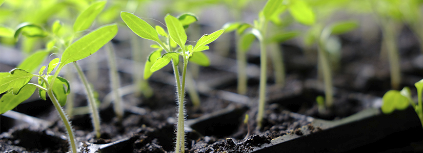 How to grow plants from seeds step by step