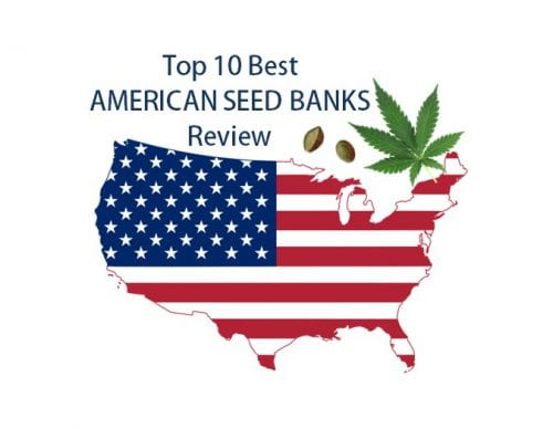 best-american-seed-banks-review