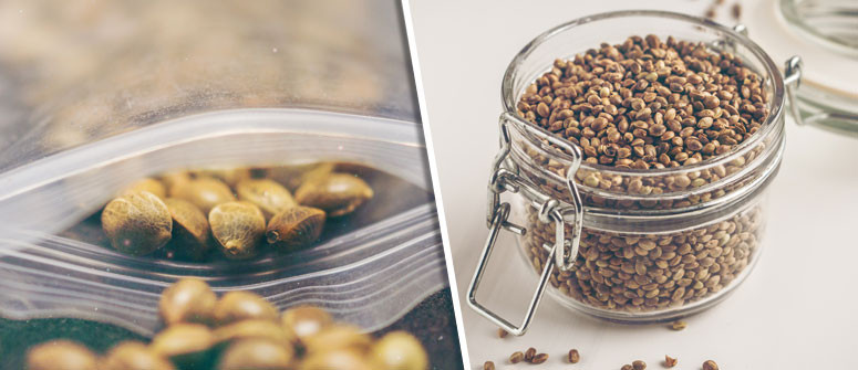 How to store cannabis seeds the best way