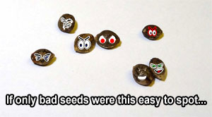 Uh oh. these are definitely some bad cannabis seeds.