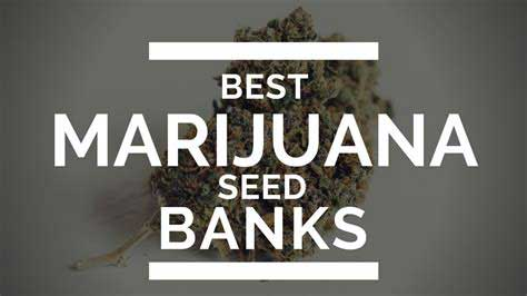 Best Cannabis Seed Banks