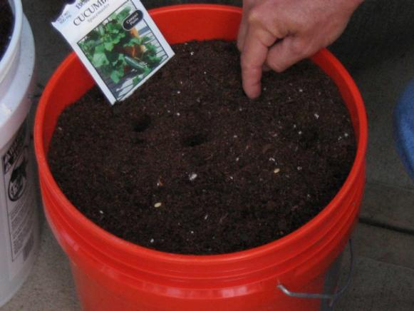 spacemaster cucumber good for container garden